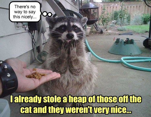 stole food raccoons - 7684472576