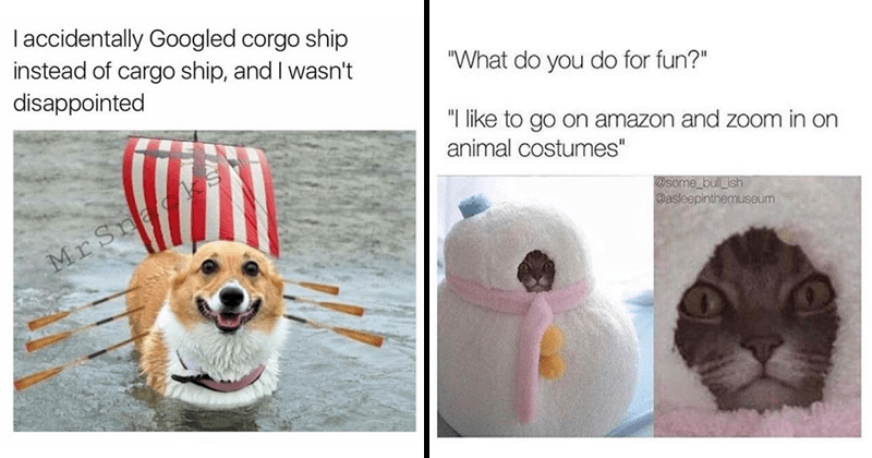 Funny animal memes, dog memes, cat memes, wholesome, wholesome memes, nice memes.