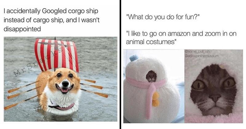 Funny animal memes, dog memes, cat memes, wholesome, wholesome memes, nice memes.