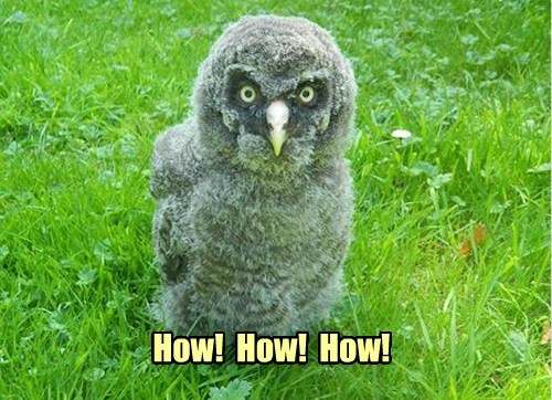 dyslexic Owl funny - 7684639232