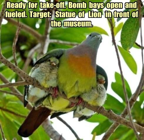 poop birds attack funny - 7684664064