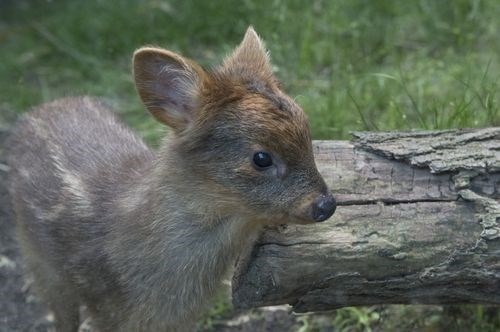 deer fawn - 7684740608