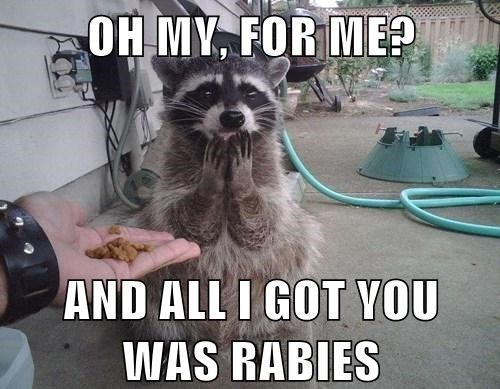 rabies,raccoon,food,funny