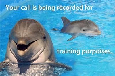 puns porpoises funny - 7685459712