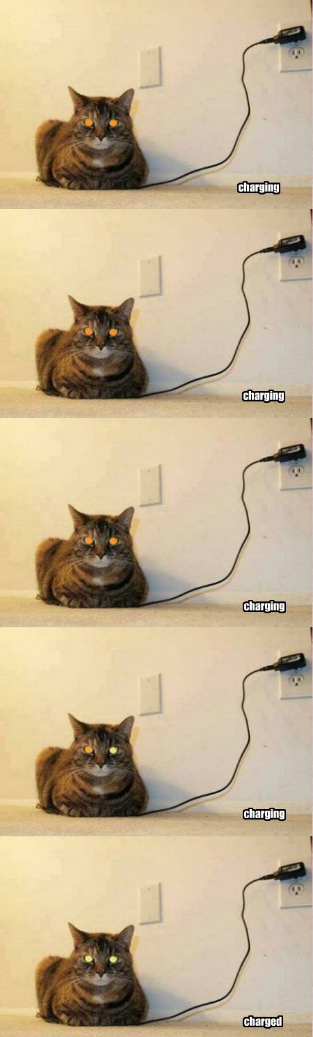 charging Cats funny - 7685608704