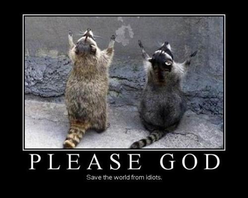 wtf prayer raccoons funny - 7685910784