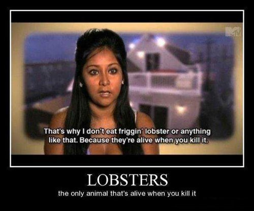 wtf snooki lobsters idiots funny - 7685929984