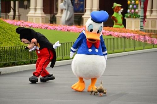 donald duck ducklings ducks - 7686100992