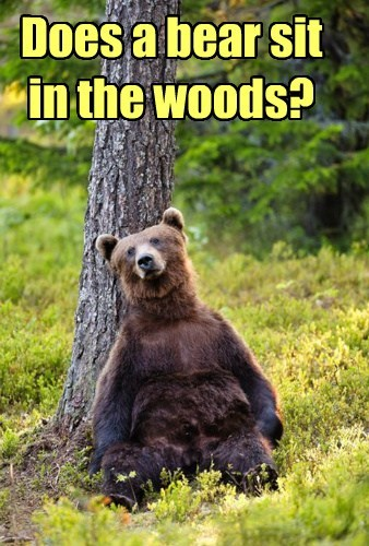 bar woods bears funny - 7686428416