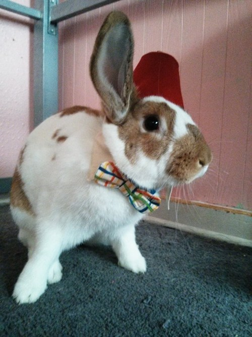 pets doctor who bunny - 7686532608