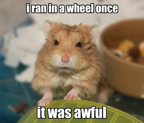 crotchety,grumpy,mouse