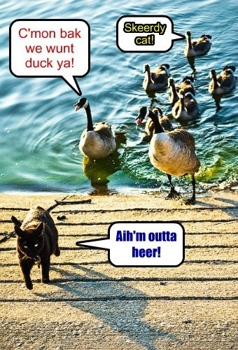 C'mon bak we wunt duck ya! Aih'm outta heer! Skeerdy cat!