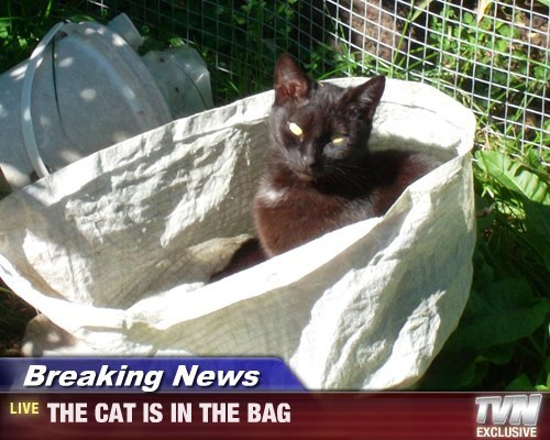 Breaking News - THE CAT IS IN THE BAG