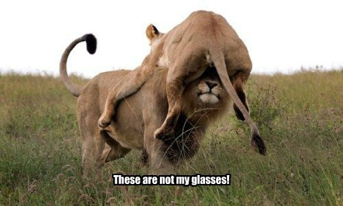 glasses lion funny - 7687851008