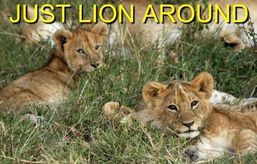 puns jungle lion funny - 7688136448