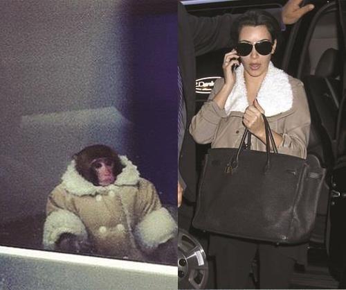Kim Kardashain Darwin monkey celeb - 7688174336