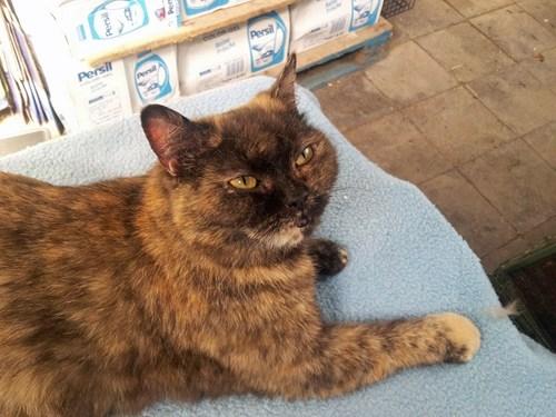 cat pets - 7688511232