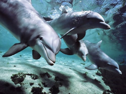 dolphins science funny animals - 7688669440