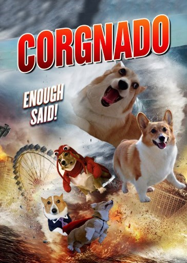 sharknado,dogs,corgis