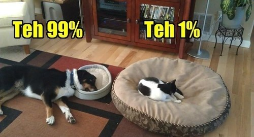 occupy wallstreet beds the one percent funny