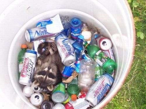 beer crunk critters raccoons funny after 12 g rated - 7689164544