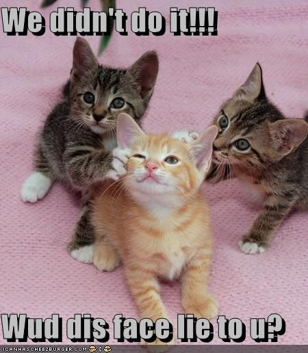 cute face kitten lie lolcats lolkittehs trouble - 768942336