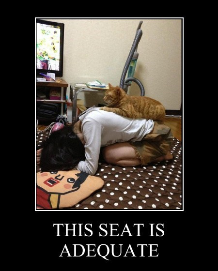 chair cat wtf funny - 7690170880