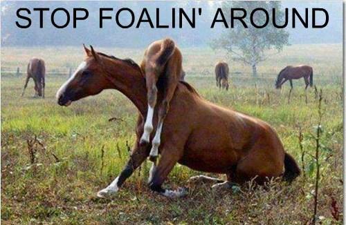 horseplay funny - 7690484480