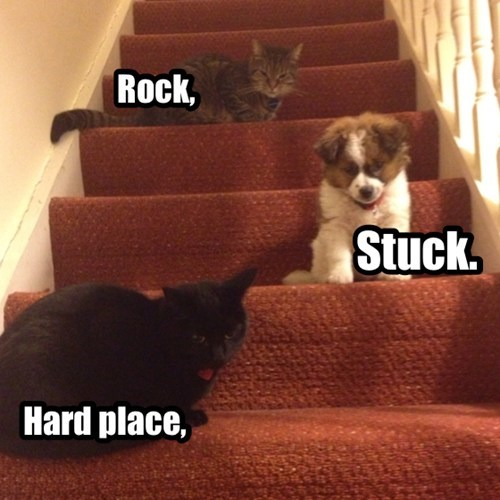 hard place,rock,stuck,not fair,funny