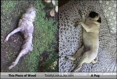 wood pugs totally looks like funny - 7690918656