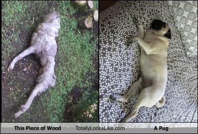 wood pugs totally looks like funny - 7690918656