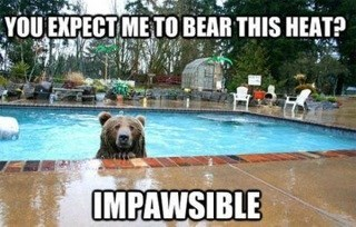 bears puns swimming pool science funny - 7690976000