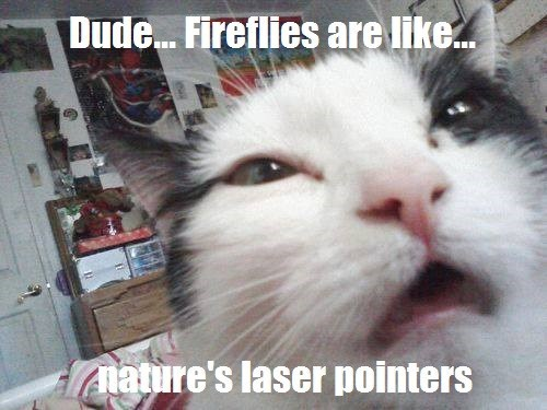 stoned laser pointers fireflies funny 10 cat - 7691229952