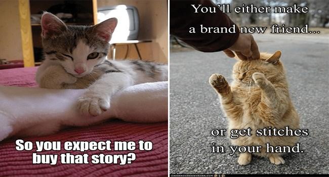 funny cat memes lolcats funny memes cute cats lol funny cats Cats funny cat memes - 7691269