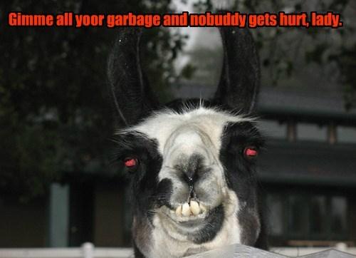 crazy llama mugging funny - 7692892672