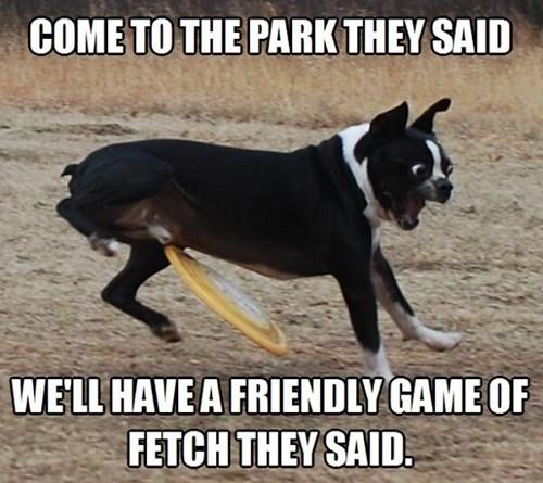 dog park,fetch,frisbee,funny