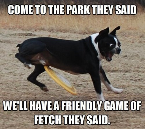 dog park fetch frisbee funny - 7693476352