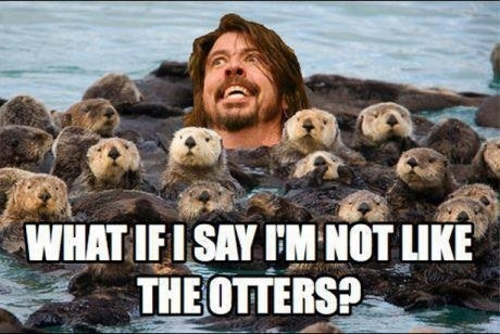 Music Dave Grohl puns otters foo fighters funny - 7693501696