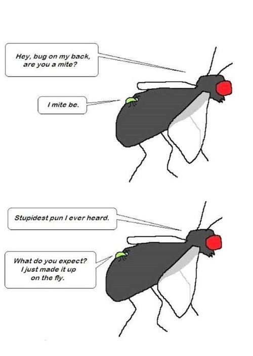 insects puns funny mites flies - 7693513472