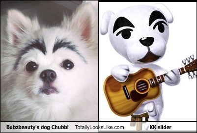 kk slider,dogs,chubbi,totally looks like,animal crossing,bubzbeauty's dog,funny