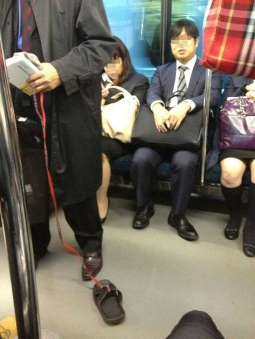 pets,sandal,Subway,public transit,funny