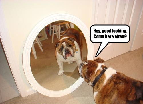 dogs mirror hard to get funny - 7698198528