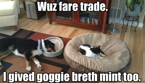 dogs,pets,blackmail,beds,Cats,funny