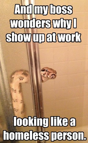 work,homeless,shower,late,funny,snake