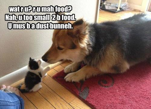 wat r u? r u mah food? Nah, u too small 2 b food. U mus b a dust bunneh.