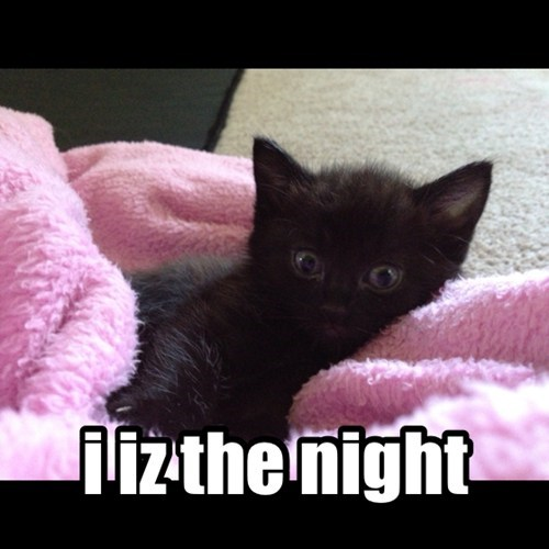 basement cat cute I AM THE NIGHT funny - 7698807040
