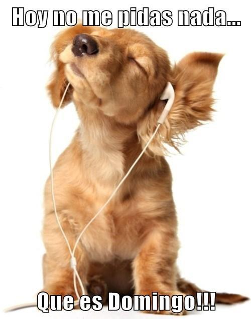 bromas perros Memes animales - 7698997248