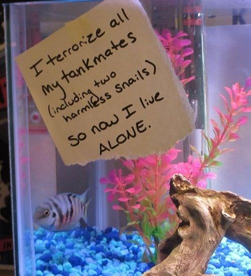 owners shaming pet fish