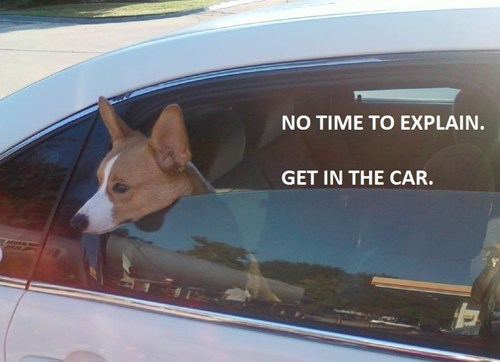 no time to explain,car,corgi,funny