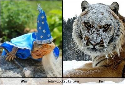 Win Totally Looks Like Fail